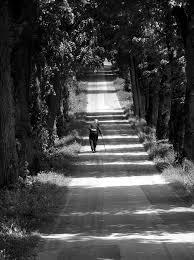 camino en las sombras